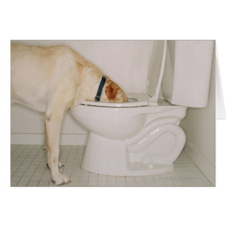 Dog drinking out of toilet card