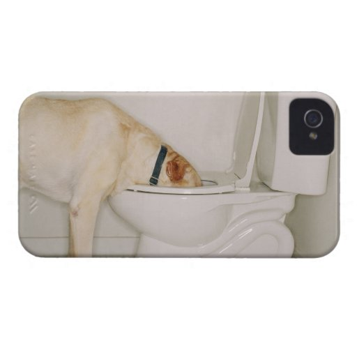 Dog drinking out of toilet iPhone 4 Case-Mate cases