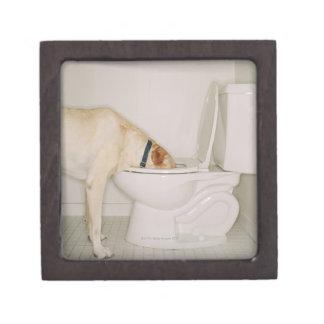 Dog drinking out of toilet keepsake box