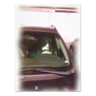 dog driving car photograph