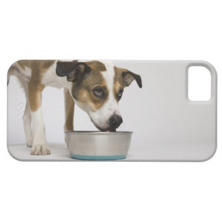 Dog eating from bowl iPhone SE/5/5s case