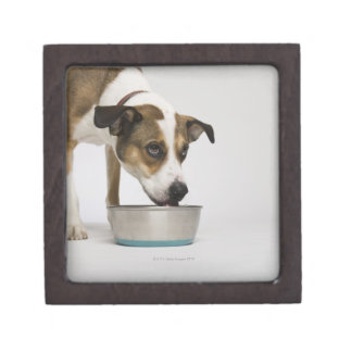 Dog eating from bowl keepsake box