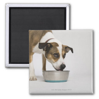 Dog eating from bowl 2 inch square magnet