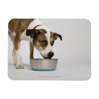 Dog eating from bowl rectangular photo magnet