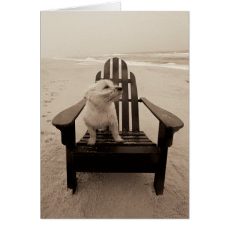 Dog Enjoying the Beach Greeting Cards