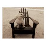 Dog Enjoying the Beach Postcard
