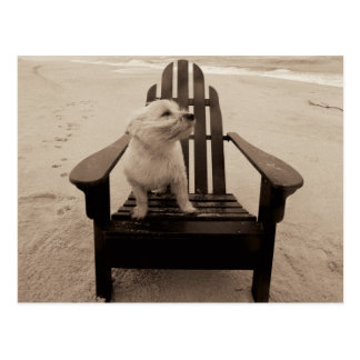 Dog Enjoying the Beach Postcard