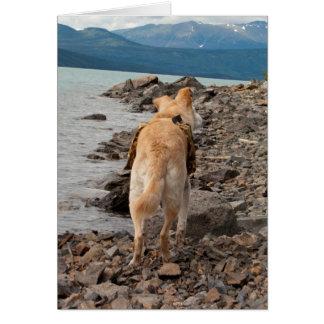 Dog: Explorer Card