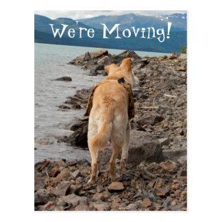 Dog: Explorer; Change of Address Postcard