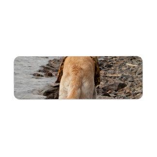 Dog: Explorer Label