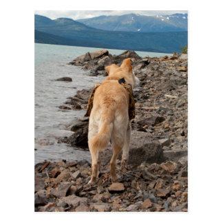 Dog: Explorer Postcard