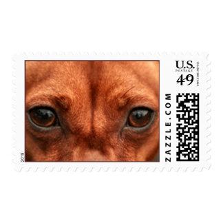 Dog Eyes Stamp, Horizontal Postage Stamp