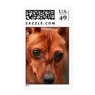 Dog Eyes Stamp, Vertical Stamps