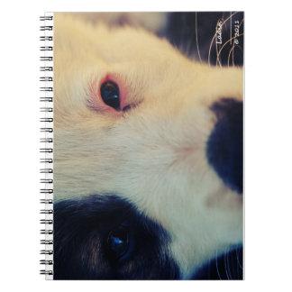 Dog Eyes Tablet Spiral Notebook