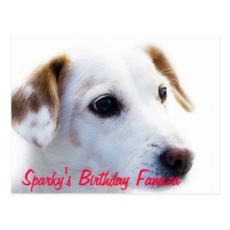 Dog Fananza Card