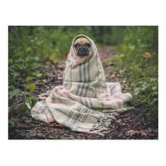Dog feel the cold postcard