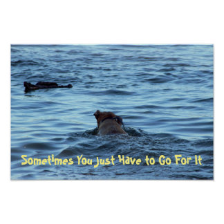 Dog Fetching Stick in Water Poster