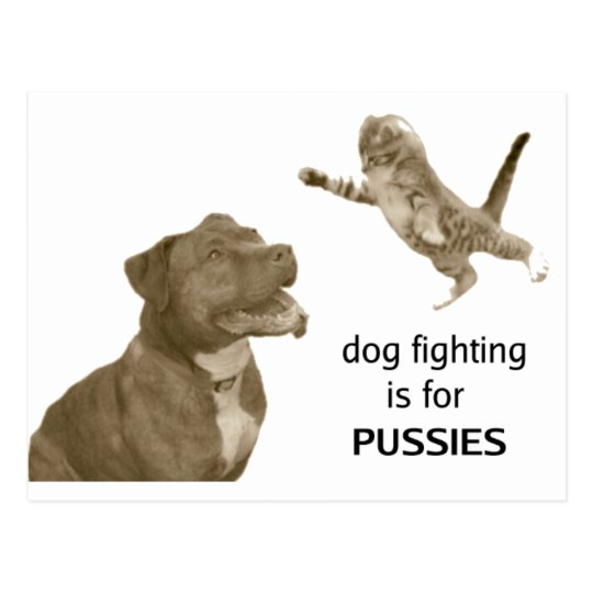 Dog fighting is for PUSSIES Postcard