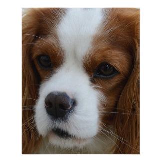 "Dog 4.5"" X 5.6"" Flyer"