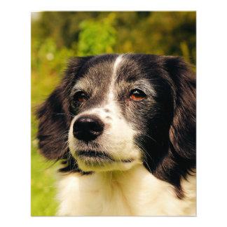 Dog Custom Flyer