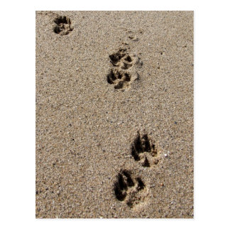 Dog Footprints Postcard