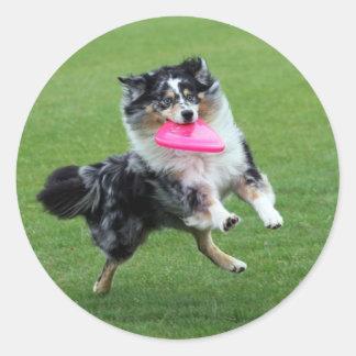 Dog Frisbee Round Sticker