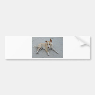 Dog from Holy Place In India Bumper Sticker