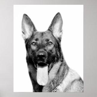 Dog german shepherd pet animal photo black white poster