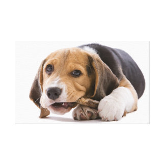 Dog Gnaws Bone  Stretched Canvas Print