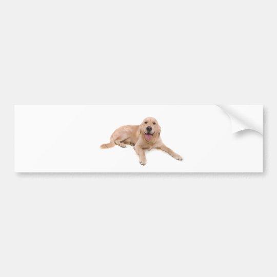 dog - golden retriever bumper sticker