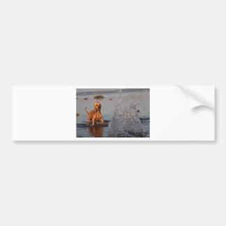 dog greeting card bumper sticker