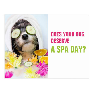 Dog Grooming Postcard-Spa Postcard