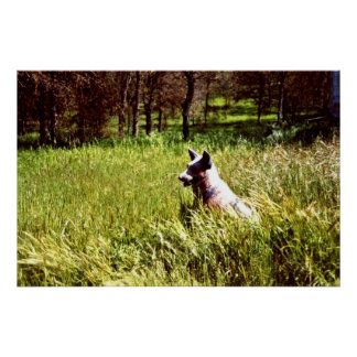 Dog Guard Dog Watcher in the woods Three Rivers CA Poster