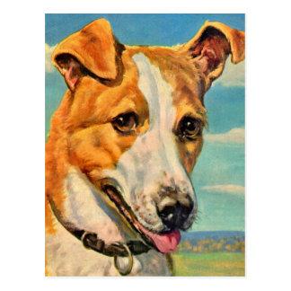 dog handsome dog postcard