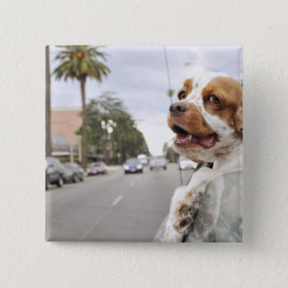 Dog hanging head out of car window button