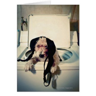 Dog helping out with the wash card