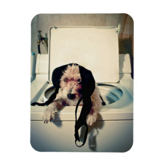 Dog helping out with the wash rectangular photo magnet