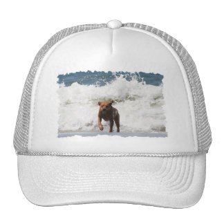 Dog - Here I Come... Trucker Hat