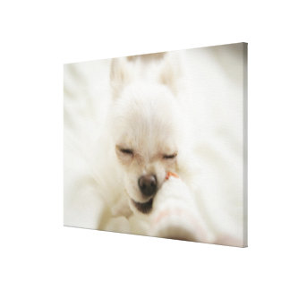 Dog holding toy in mouth canvas print