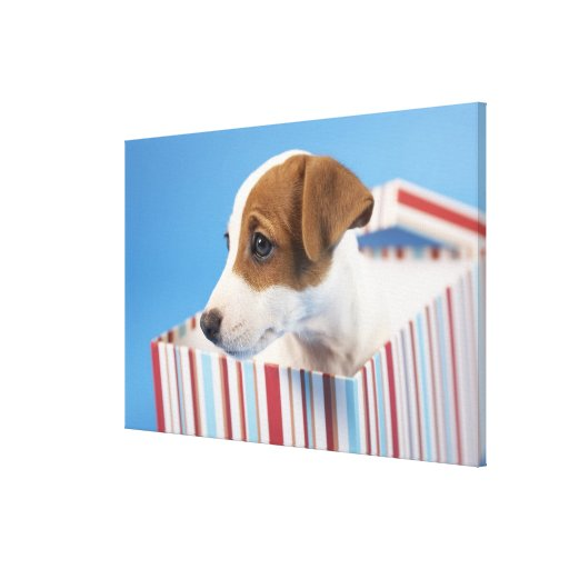 Dog in a Gift Box Gallery Wrapped Canvas