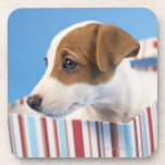Dog in a Gift Box Coasters