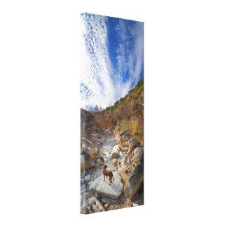 Dog in Barton Creek Dry - Austin Texas Gallery Wrap Canvas
