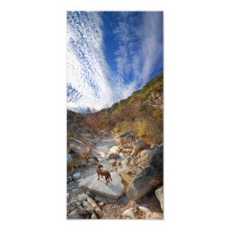 Dog in Barton Creek Dry - Austin Texas Art Photo
