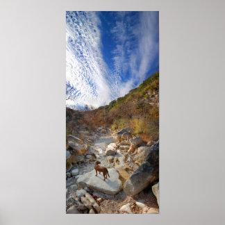 Dog in Barton Creek Dry - Austin Texas Print