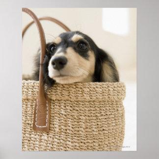 Dog in basket poster