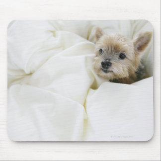 Dog in bed mouse pad