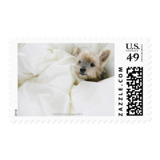 Dog in bed postage