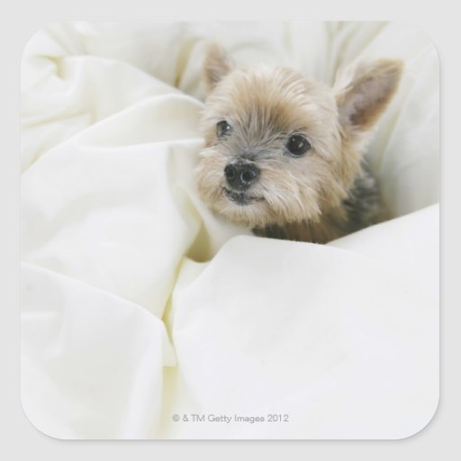 Dog in bed stickers