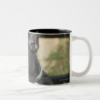 Dog in car Two-Tone coffee mug