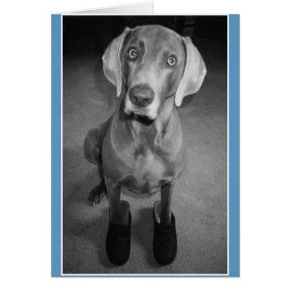 """Dog in Clogs"" - funny blank b&w art card Cards"